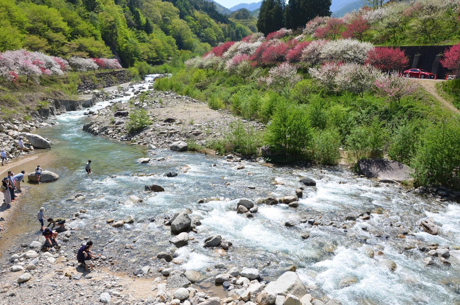 花桃と川遊びの写真